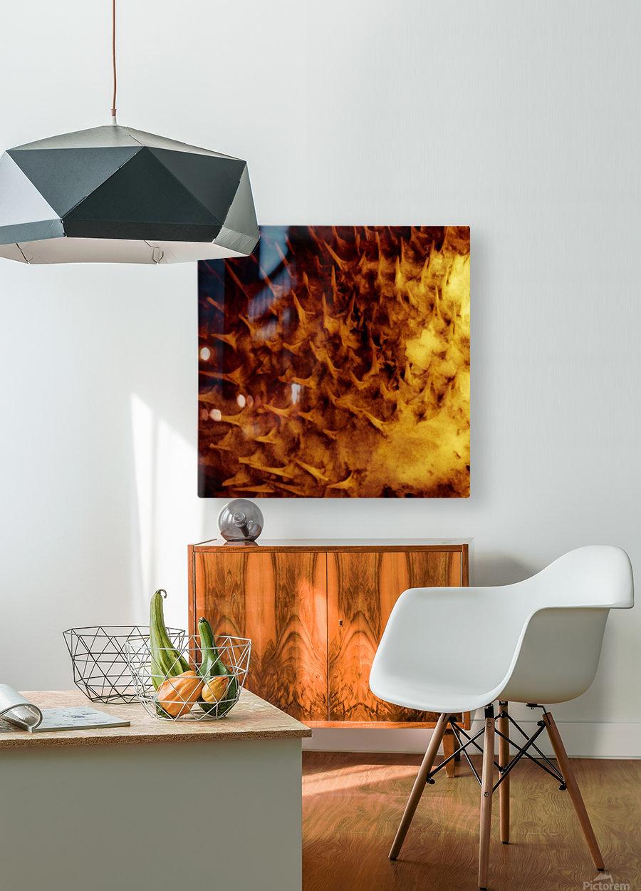 CURIOSITY - ORANGE  HD Metal print with Floating Frame on Back
