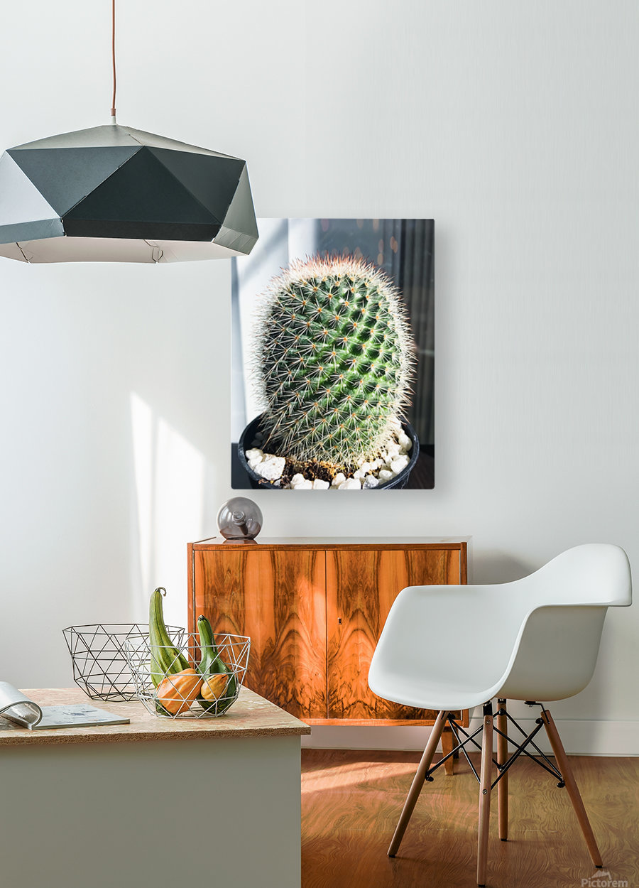 closeup green cactus texture with morning sunlight  HD Metal print with Floating Frame on Back