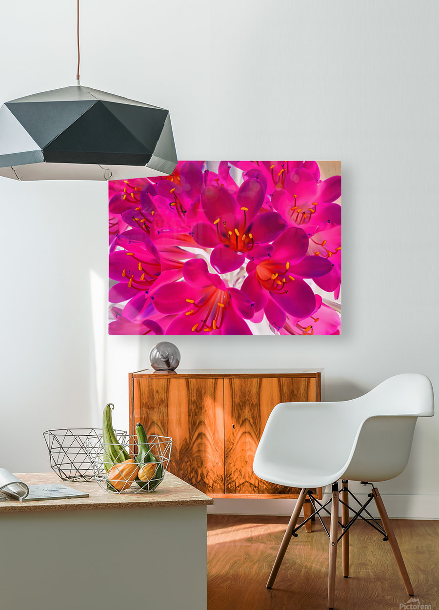closeup pink flower texture abstract background with orange pollen  HD Metal print with Floating Frame on Back