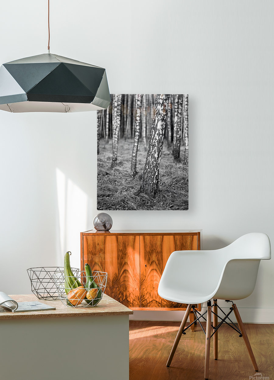 The Birches  HD Metal print with Floating Frame on Back