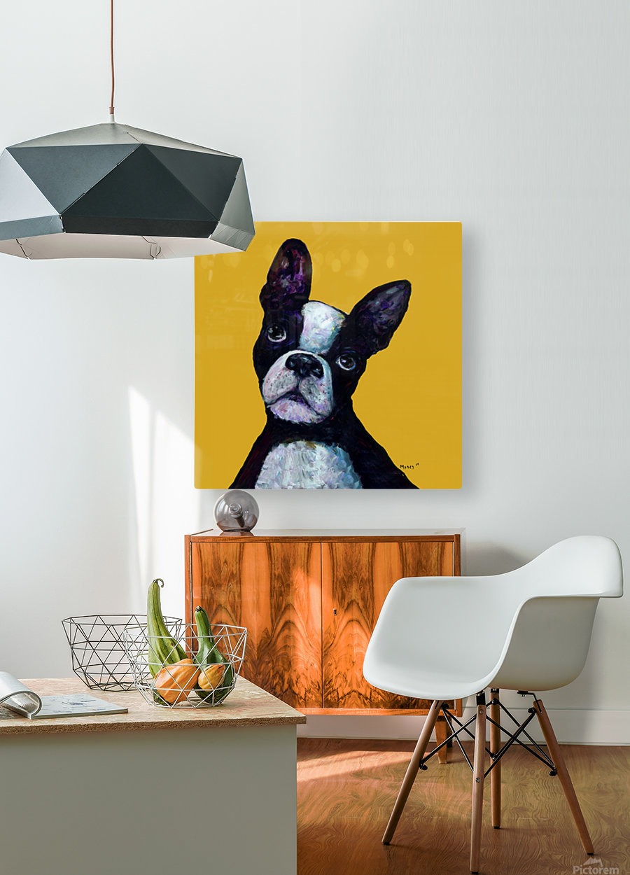 BOSTON TERRIER ON YELLOW  HD Metal print with Floating Frame on Back