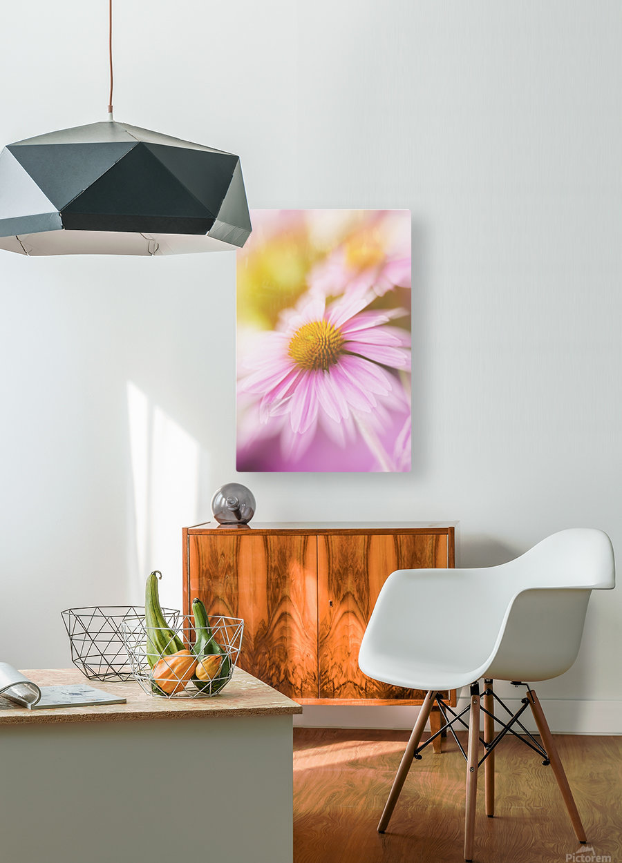 Dreamy Pink Coneflower   HD Metal print with Floating Frame on Back