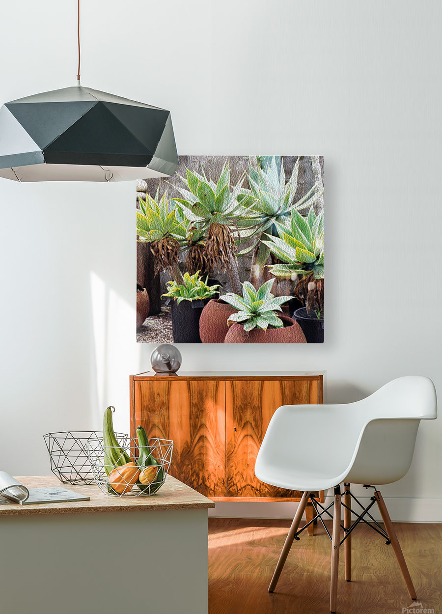 Potted Agave Plant  HD Metal print with Floating Frame on Back
