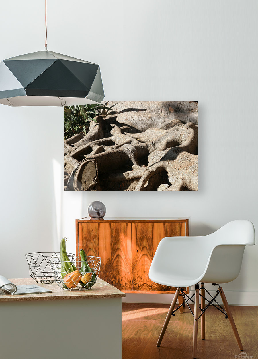 Signed Tree Roots  HD Metal print with Floating Frame on Back