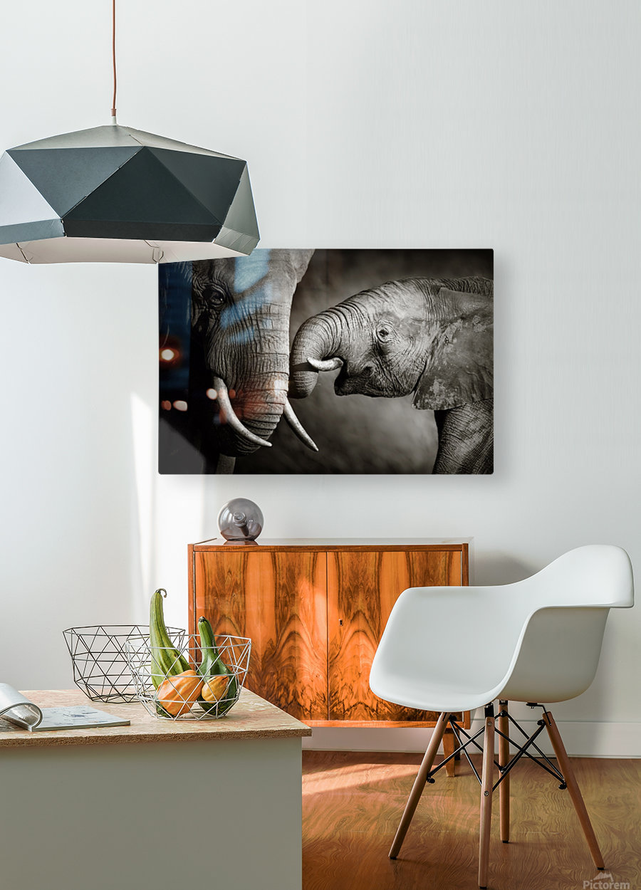 Elephant affection  HD Metal print with Floating Frame on Back