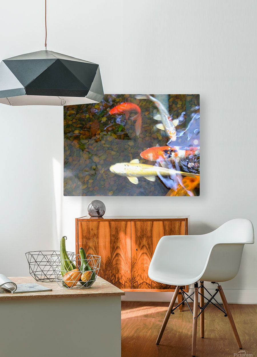Koi Fish In Home Pond   HD Metal print with Floating Frame on Back