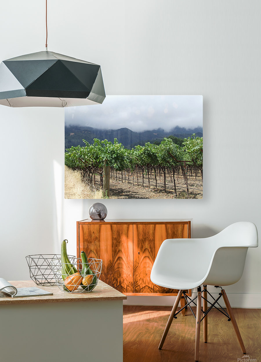 Napa Califoria Grape Vines summer 2007   HD Metal print with Floating Frame on Back