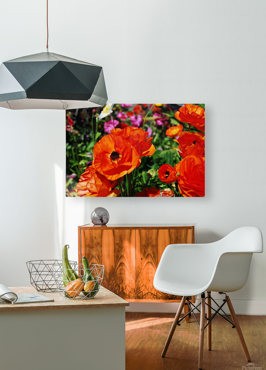 Garden with Orange Flowers Growing  HD Metal print with Floating Frame on Back