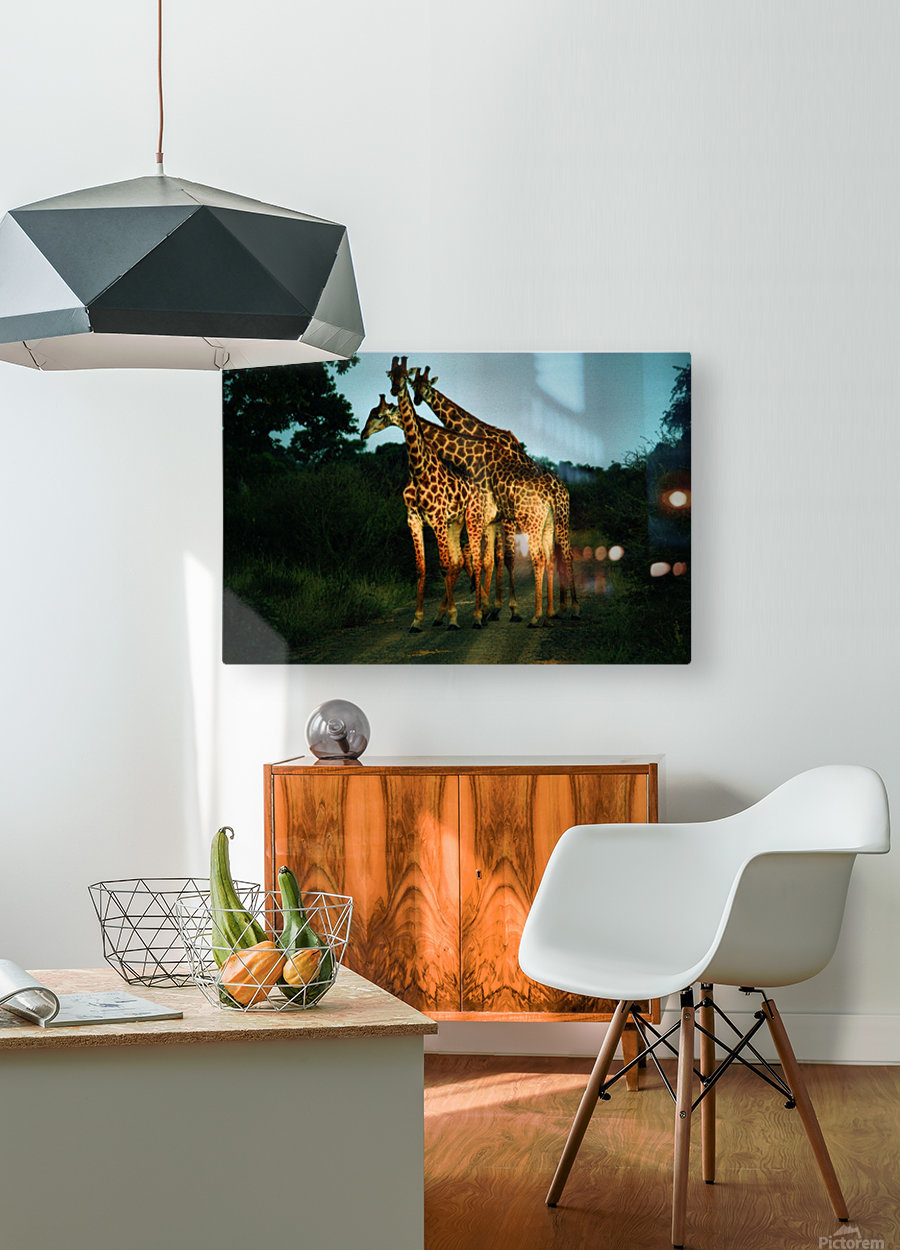Giraffes  HD Metal print with Floating Frame on Back