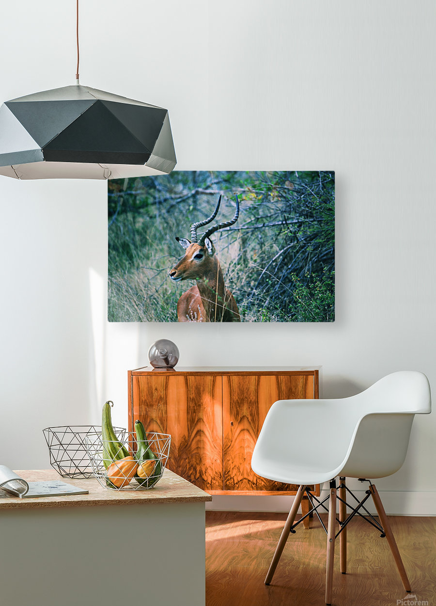 African Game  HD Metal print with Floating Frame on Back