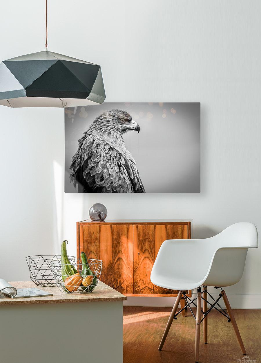 EAGLE EYE  HD Metal print with Floating Frame on Back