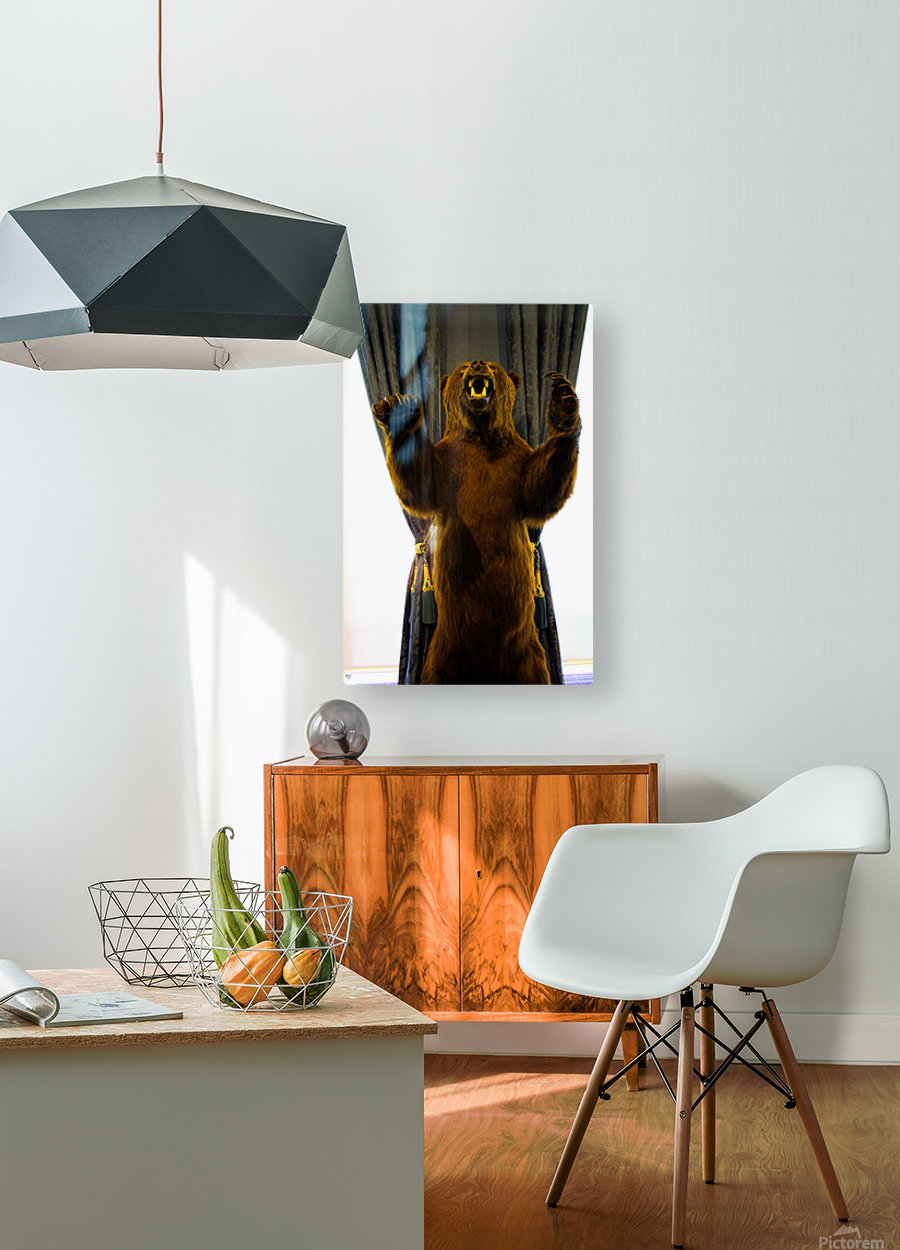 Bear  HD Metal print with Floating Frame on Back