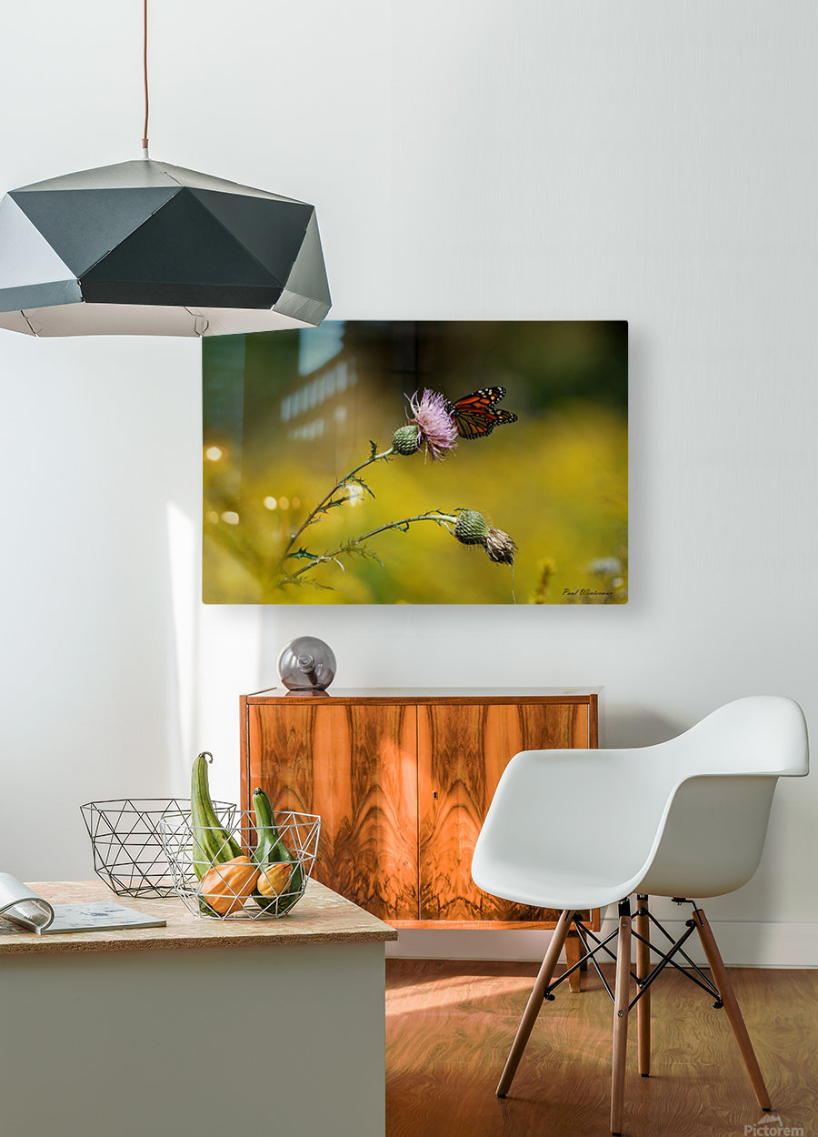 0017- Monarch Meal  HD Metal print with Floating Frame on Back