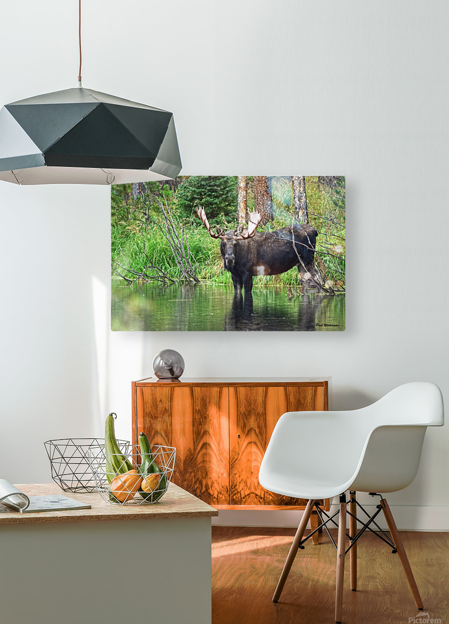 2314- The Look  HD Metal print with Floating Frame on Back