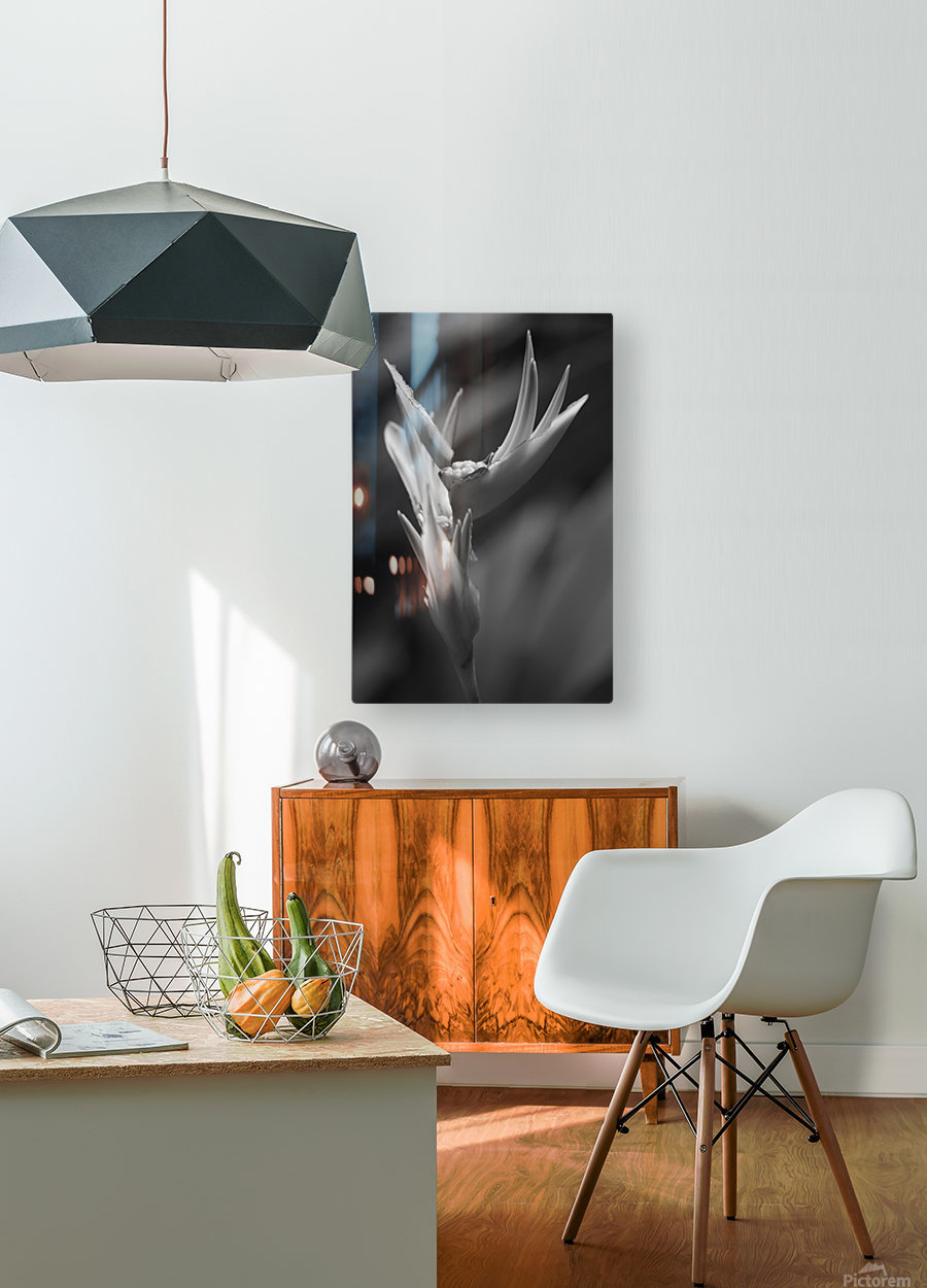 Claw  HD Metal print with Floating Frame on Back