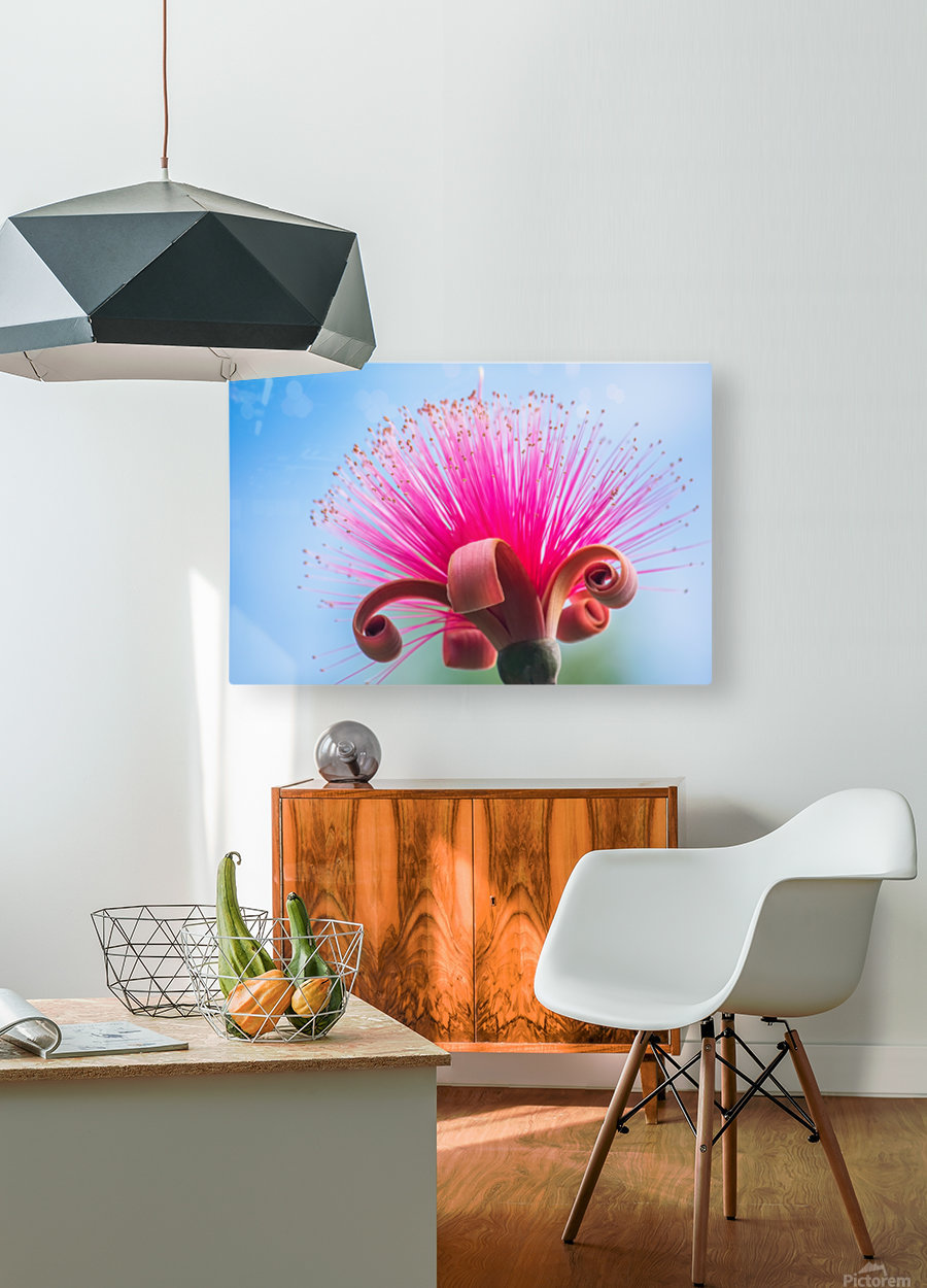 Pinky  HD Metal print with Floating Frame on Back