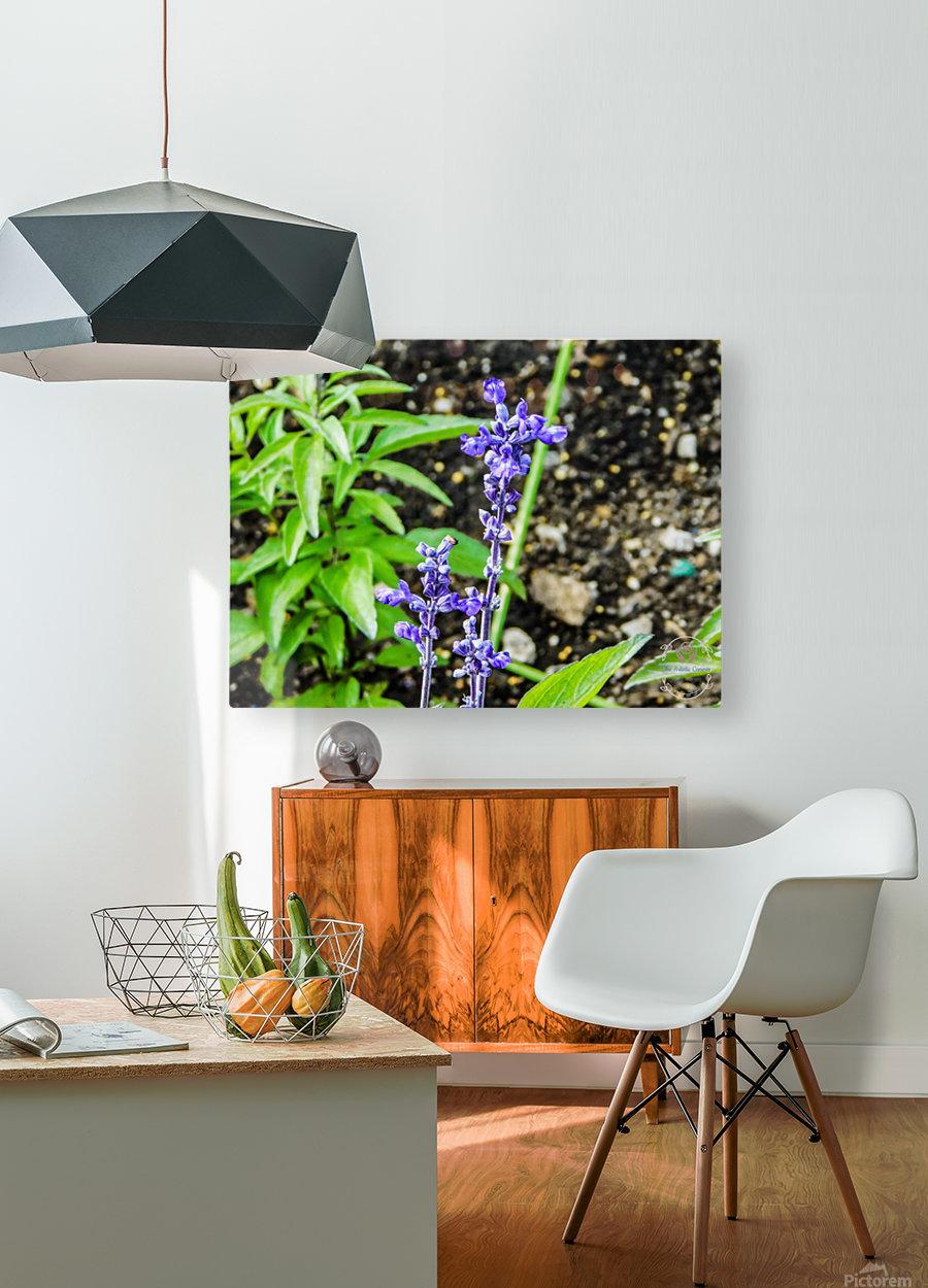 DSCN0817  HD Metal print with Floating Frame on Back