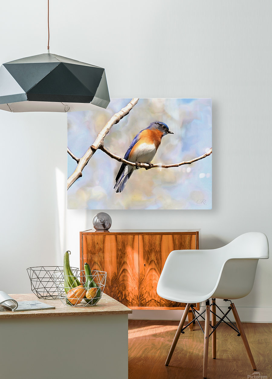 Blue Bird  HD Metal print with Floating Frame on Back