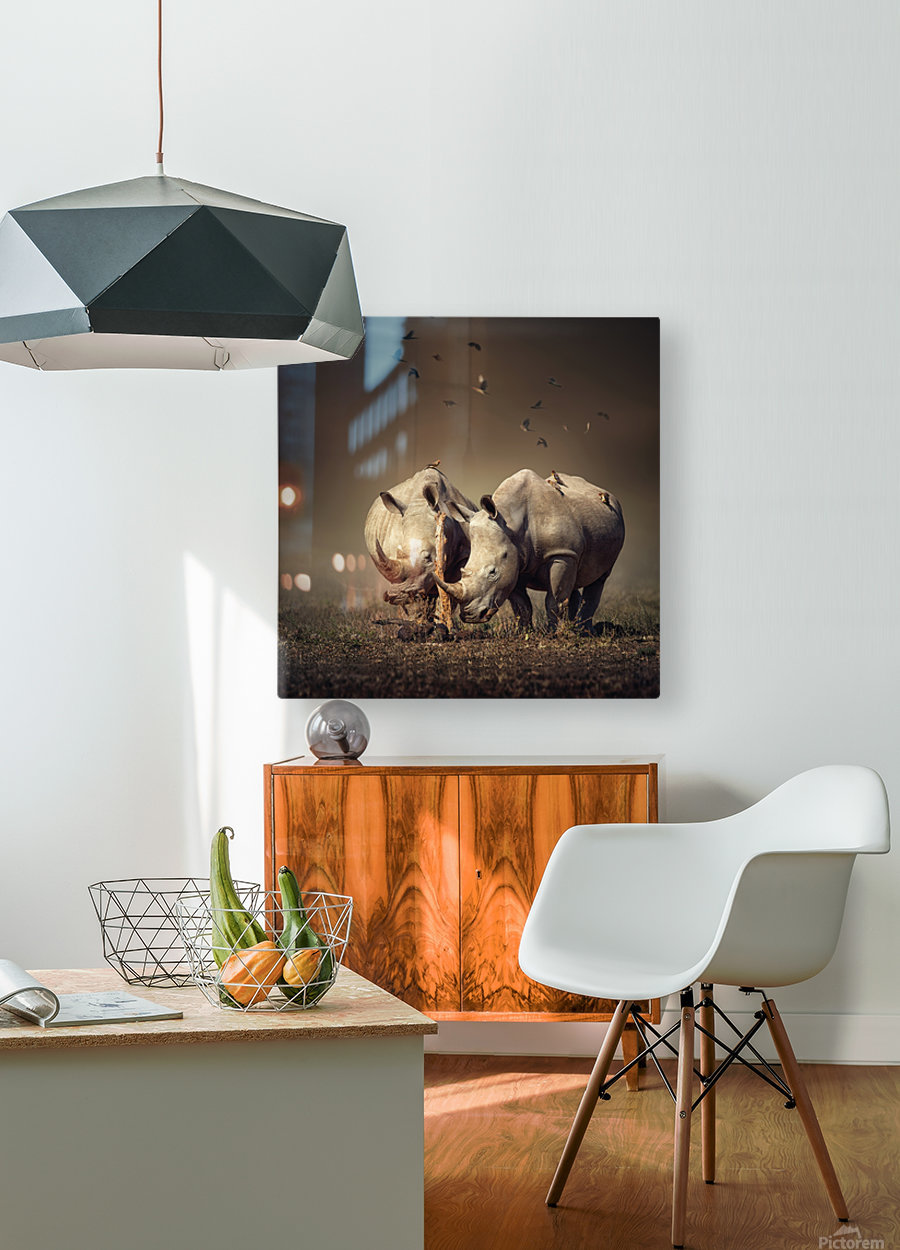 Two Rhinoceros with birds  HD Metal print with Floating Frame on Back