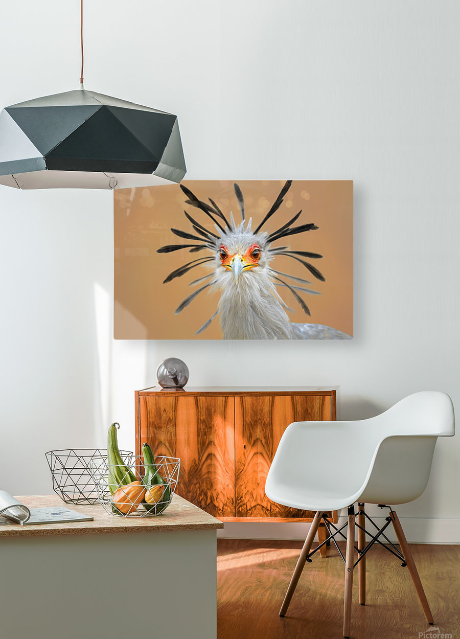 Secretary bird portrait close-up head shot  HD Metal print with Floating Frame on Back