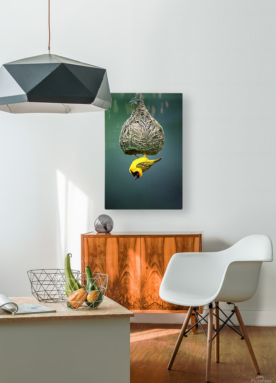 Masked weaver at nest  HD Metal print with Floating Frame on Back