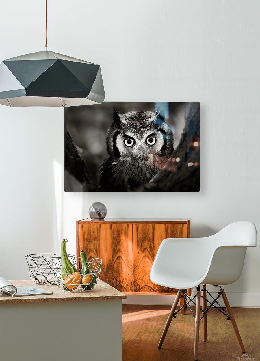 Whitefaced Owl close-up  HD Metal print with Floating Frame on Back