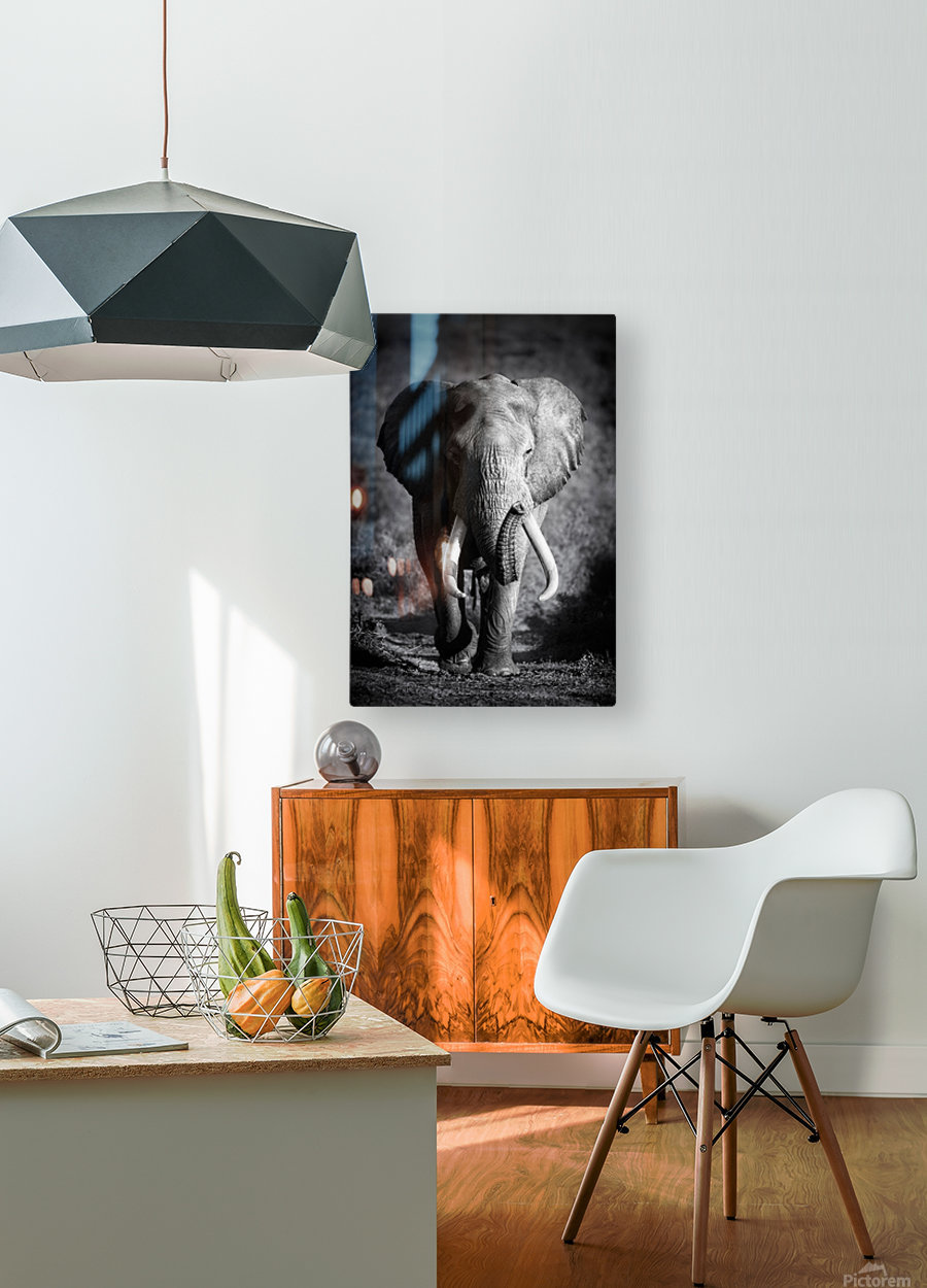 Elephant Bull  HD Metal print with Floating Frame on Back