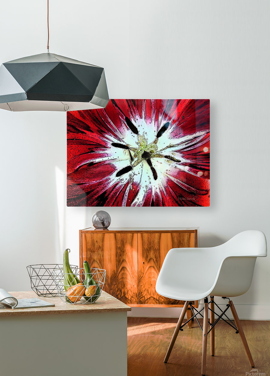 Red Tulip  HD Metal print with Floating Frame on Back
