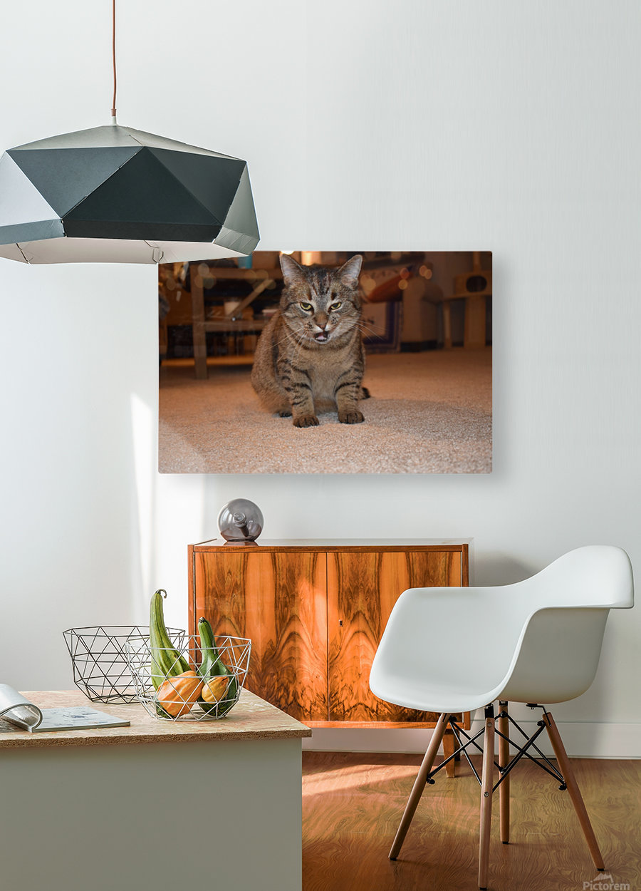 Curious Chloe  HD Metal print with Floating Frame on Back