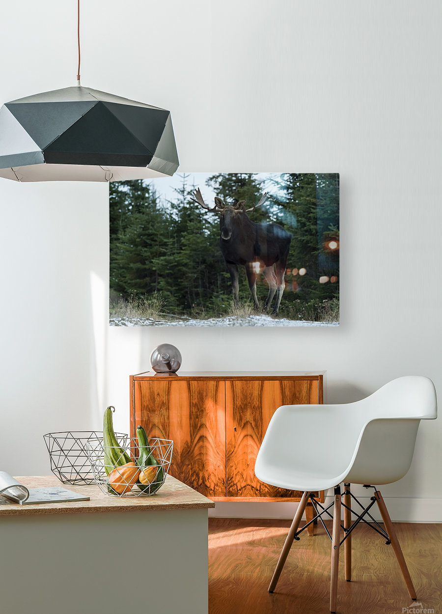 Le roi des forets  HD Metal print with Floating Frame on Back