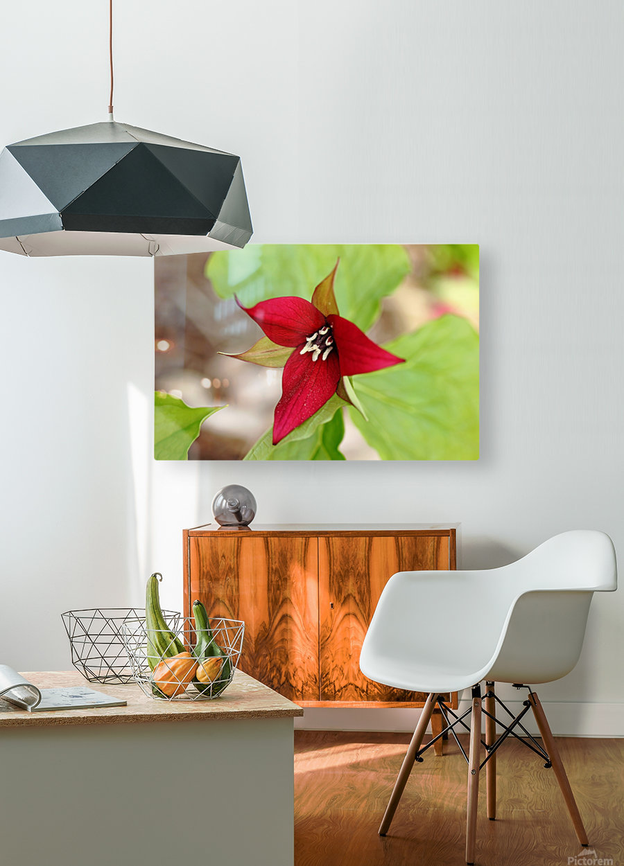 Red Trillium  HD Metal print with Floating Frame on Back