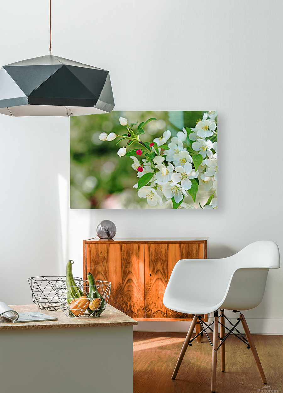 Crabapple Blossoms  HD Metal print with Floating Frame on Back