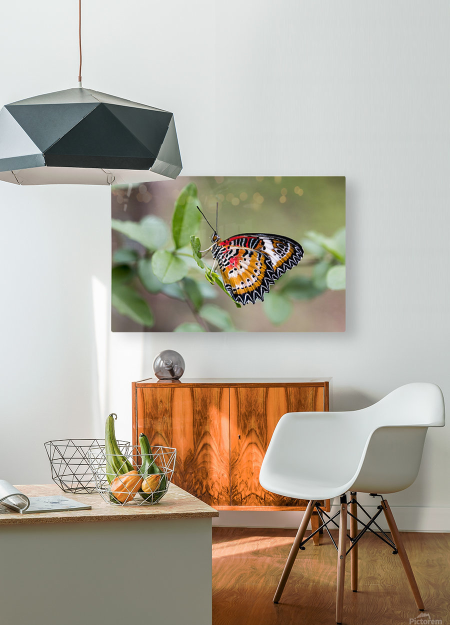 Leopard lacewing   HD Metal print with Floating Frame on Back