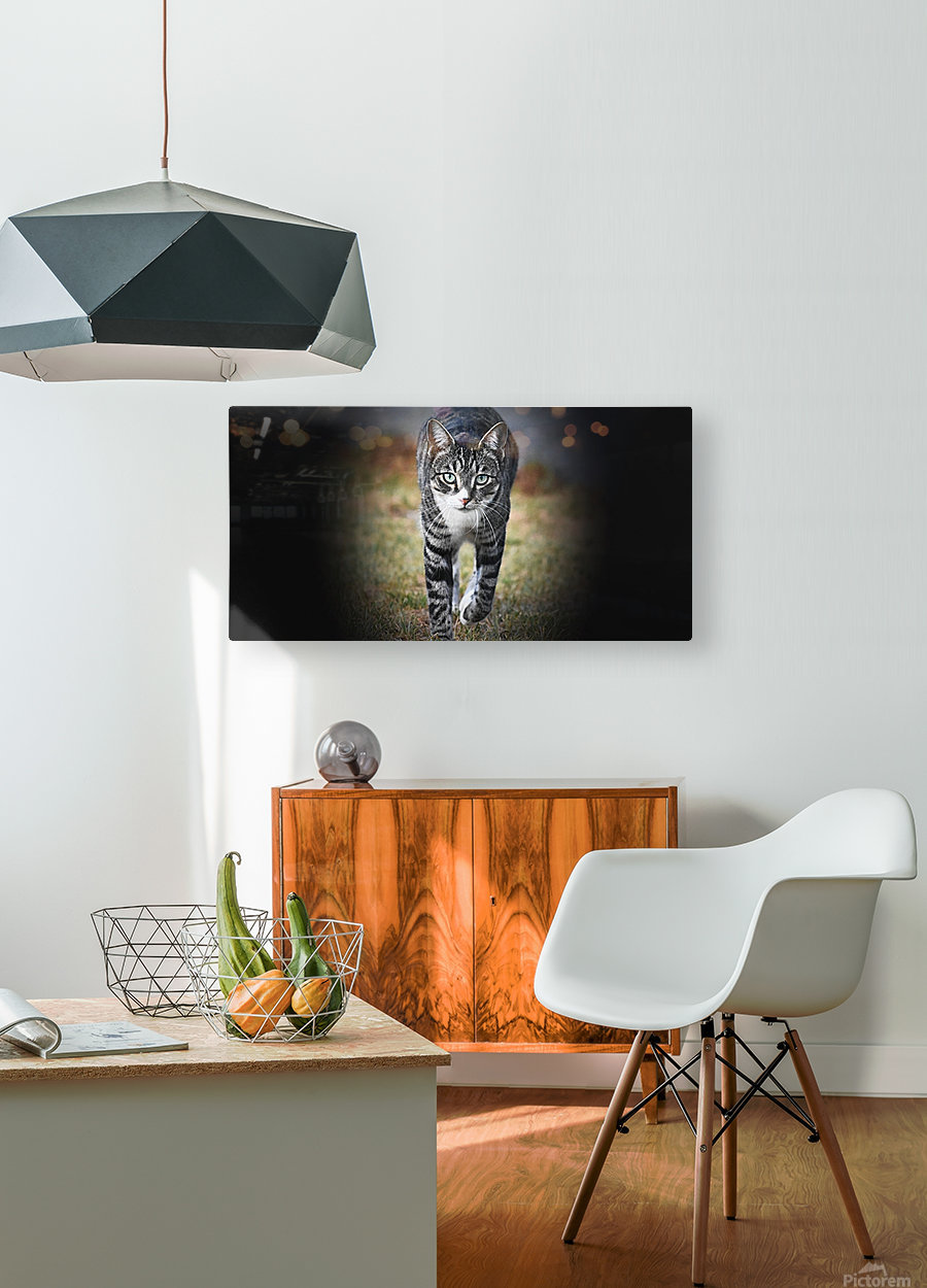 Tiny - walking  HD Metal print with Floating Frame on Back