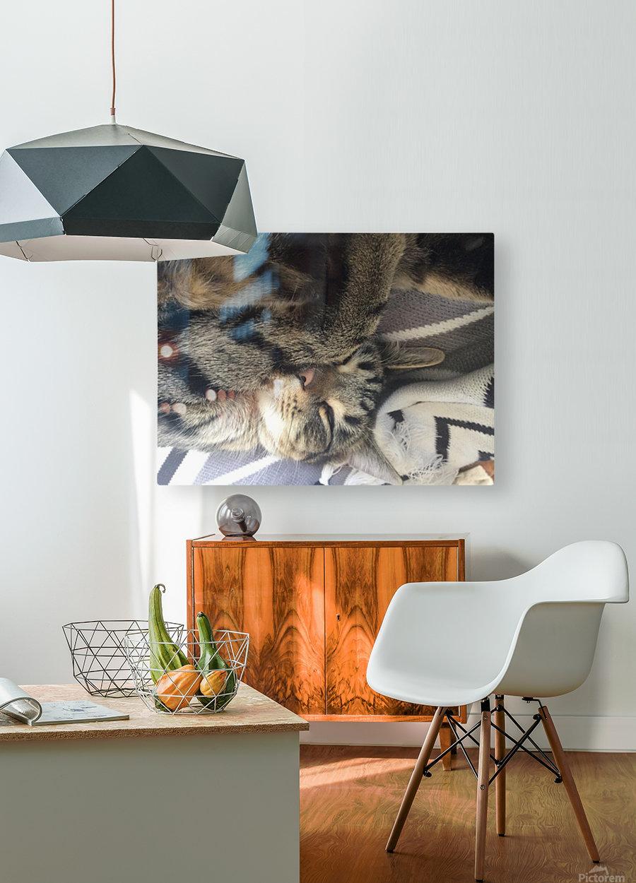 Gizmo - sleepy  HD Metal print with Floating Frame on Back
