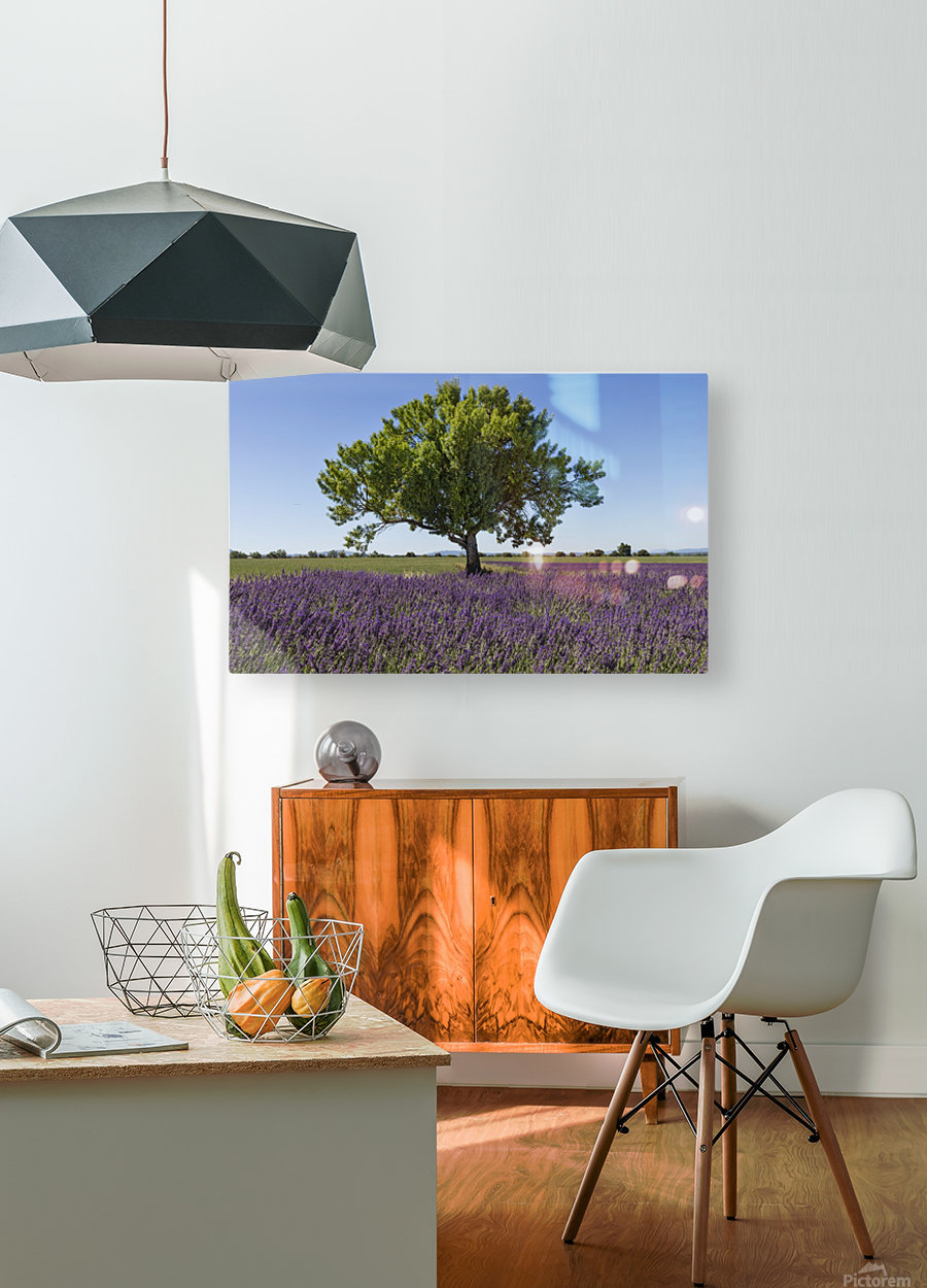 Tree in a lavender field  HD Metal print with Floating Frame on Back