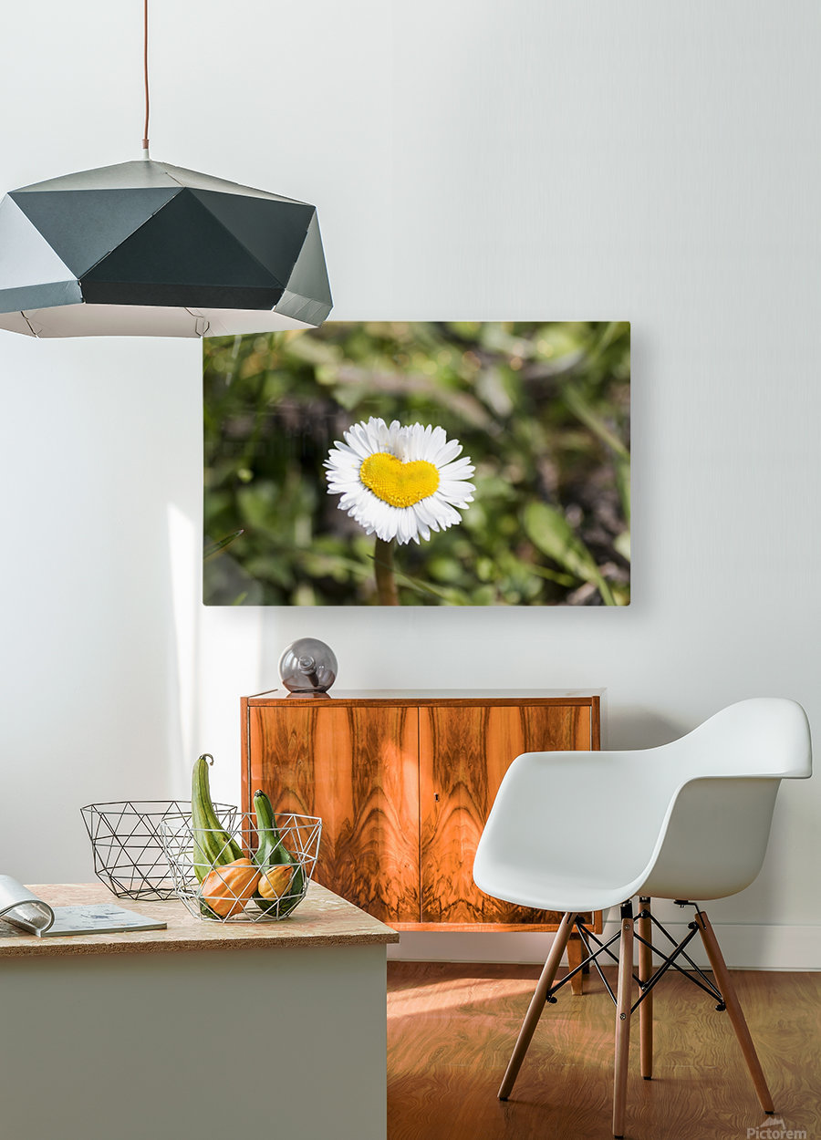 Heart shaped daisy  HD Metal print with Floating Frame on Back