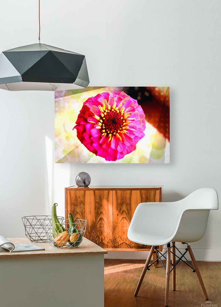 Rainbow daisy  HD Metal print with Floating Frame on Back