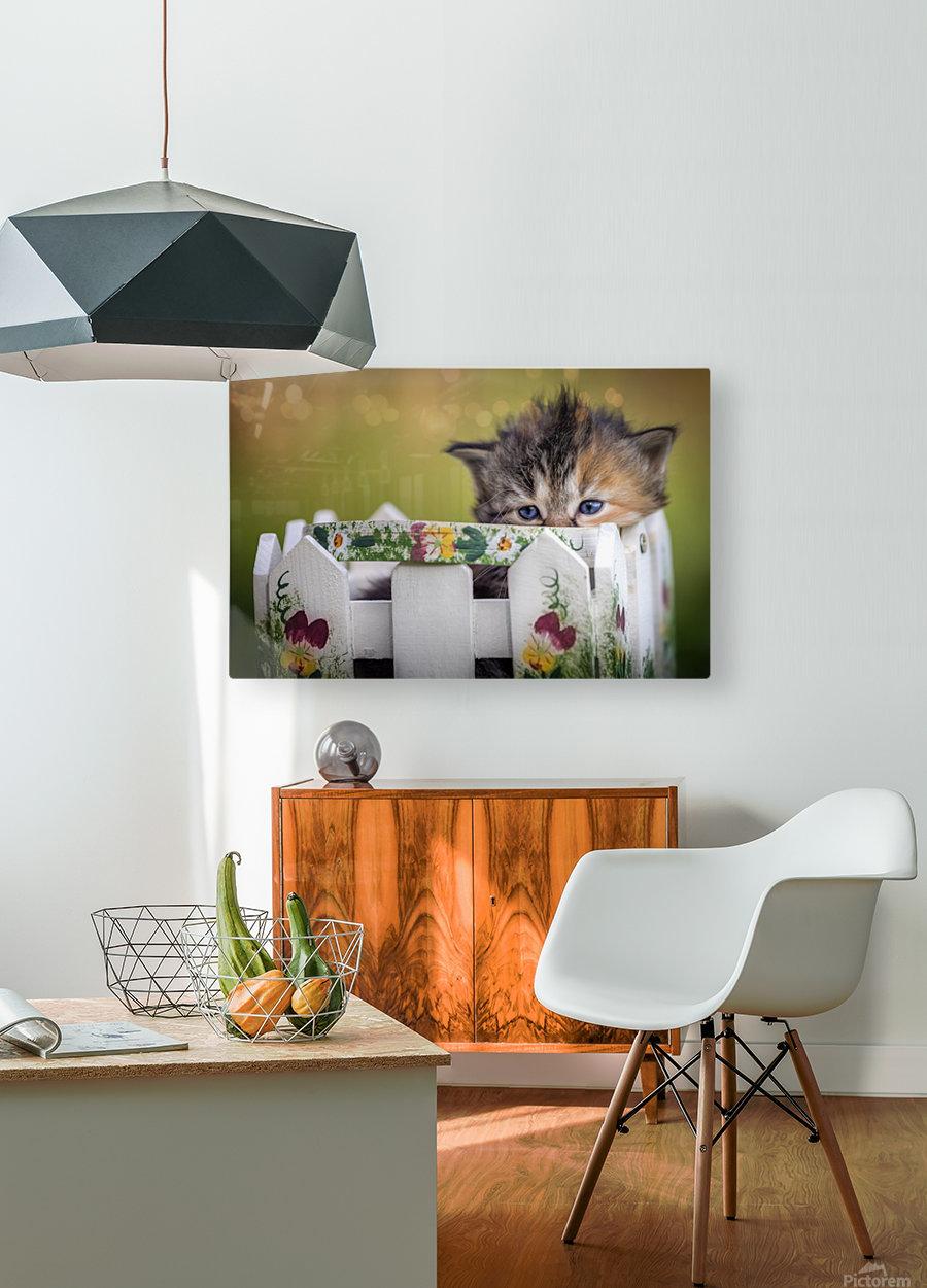 Kitten in basket  HD Metal print with Floating Frame on Back