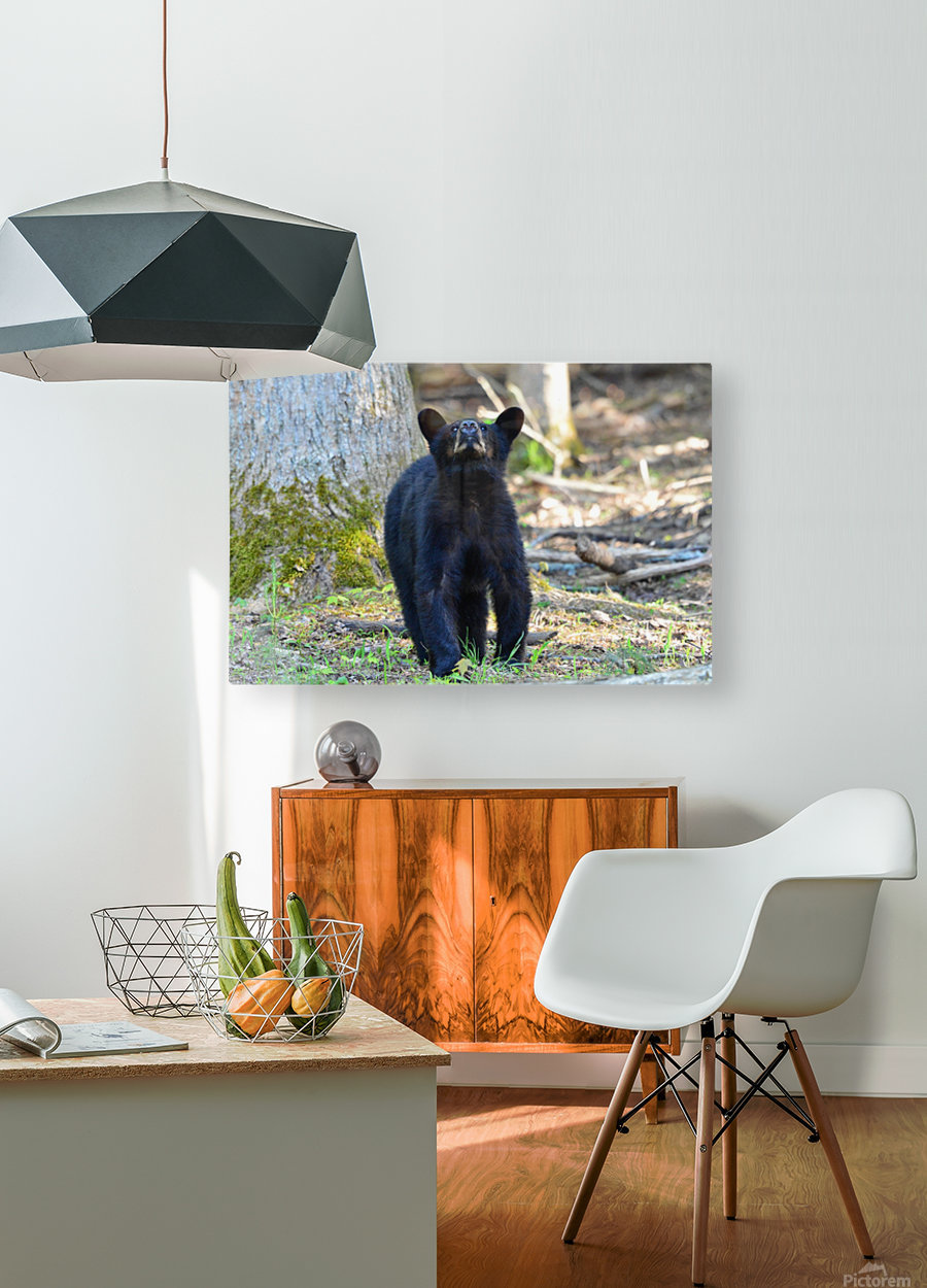 2506-Nose in the air  HD Metal print with Floating Frame on Back