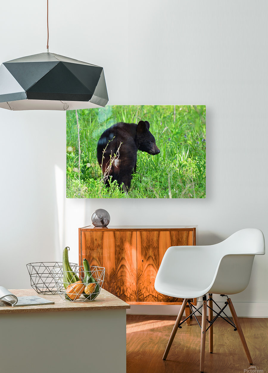 2827-Turn around  HD Metal print with Floating Frame on Back