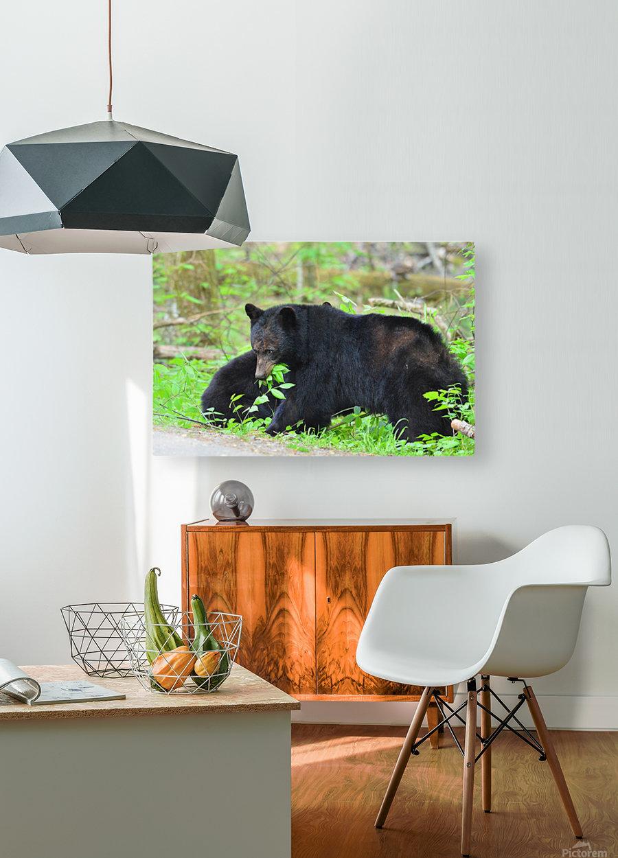 3415-Meal Break  HD Metal print with Floating Frame on Back