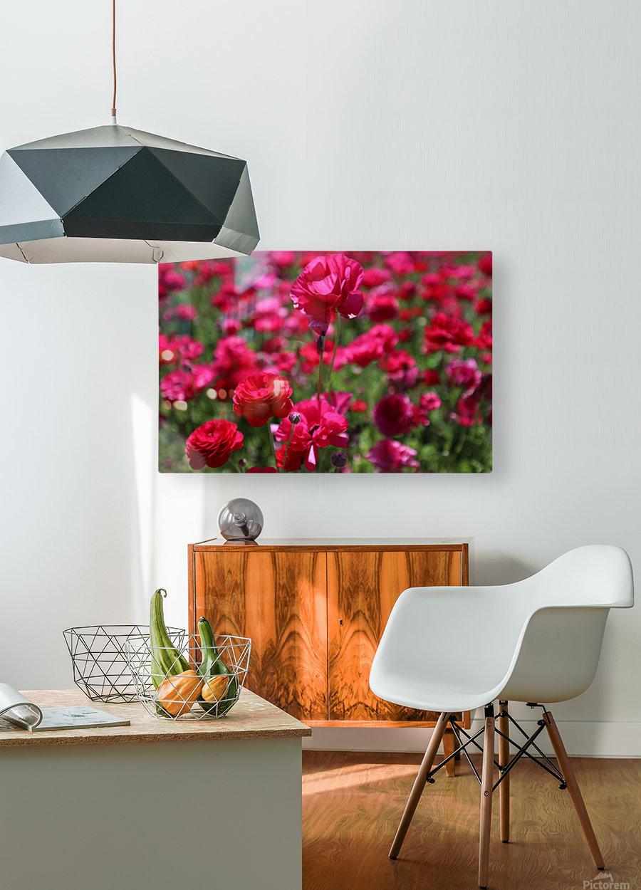 Never-ending Roses   HD Metal print with Floating Frame on Back
