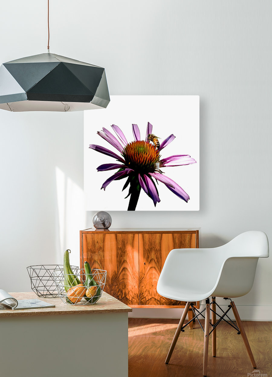 Daisy Bee  HD Metal print with Floating Frame on Back