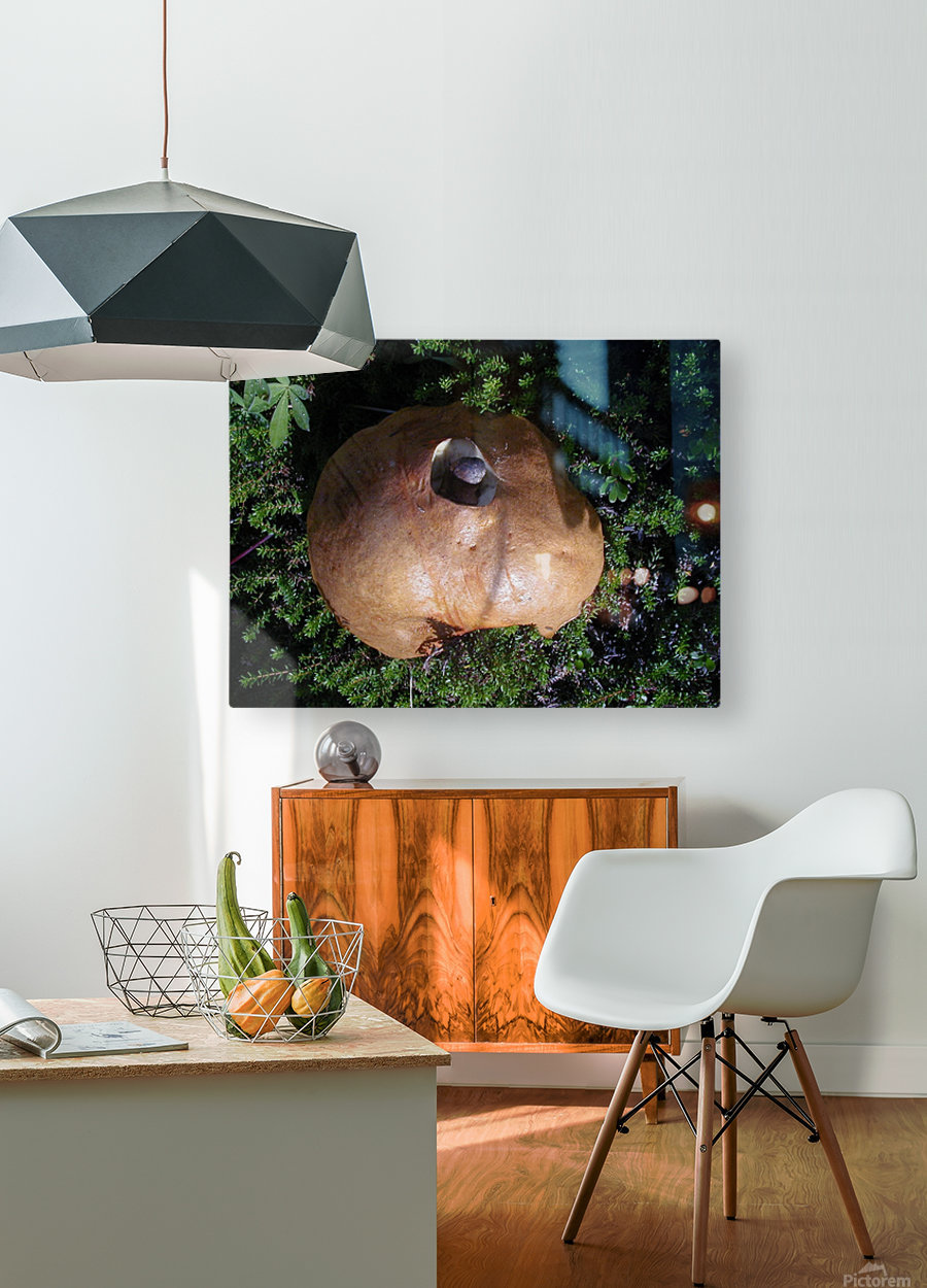 Mushroom  HD Metal print with Floating Frame on Back