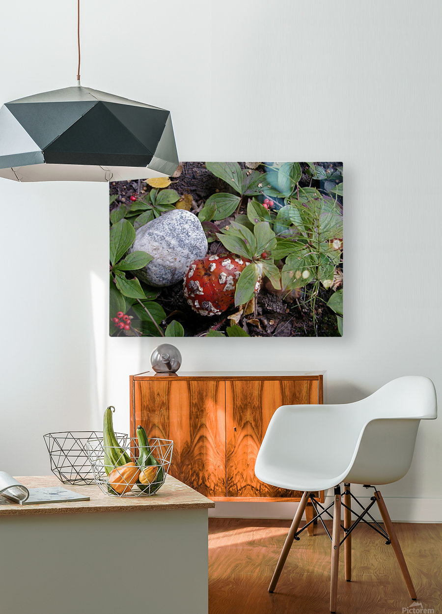 Red Mushroom & Rock  HD Metal print with Floating Frame on Back