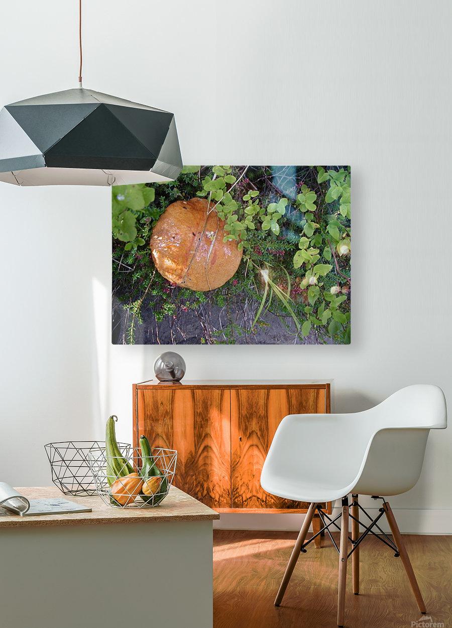Bisquit Mushroom  HD Metal print with Floating Frame on Back