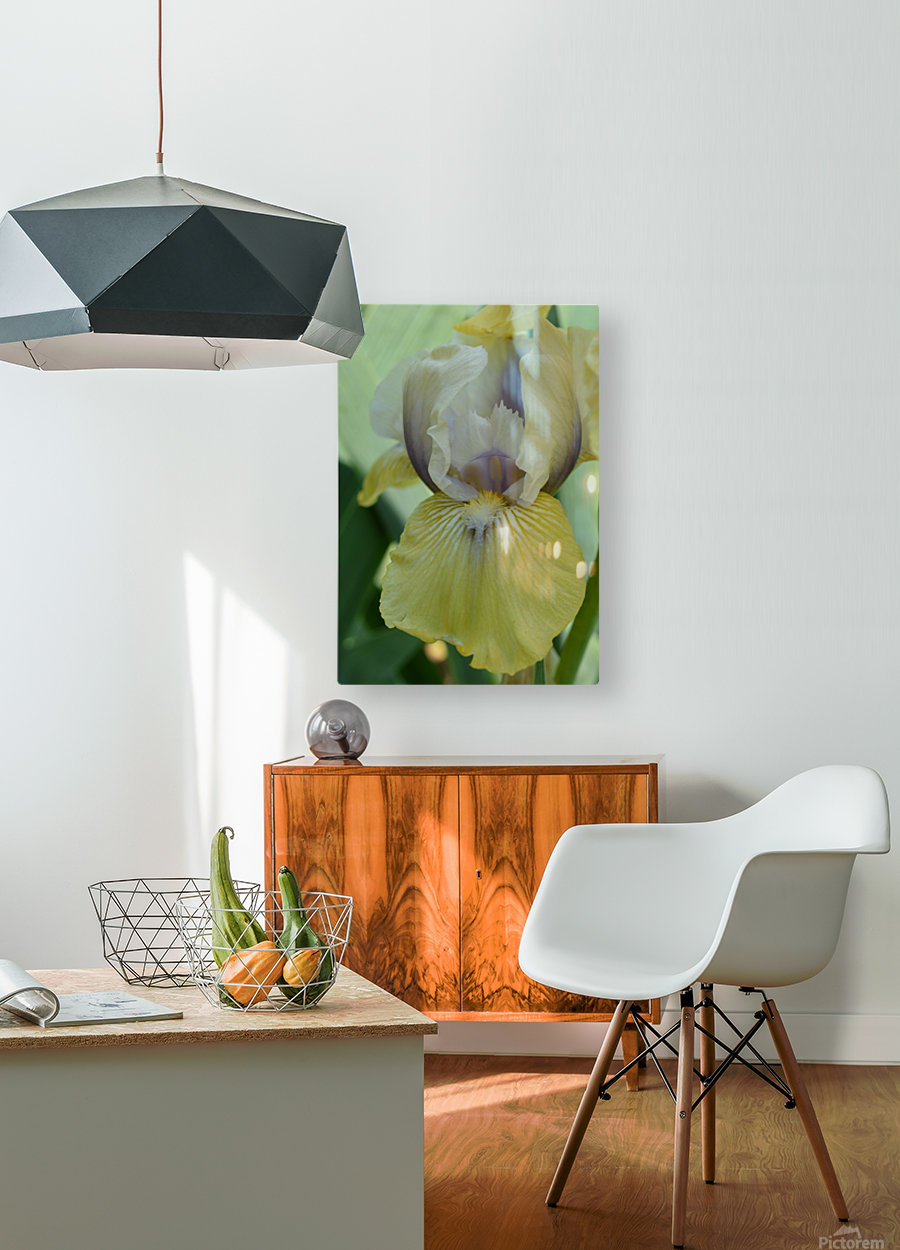 Yellow Iris Photograph  HD Metal print with Floating Frame on Back