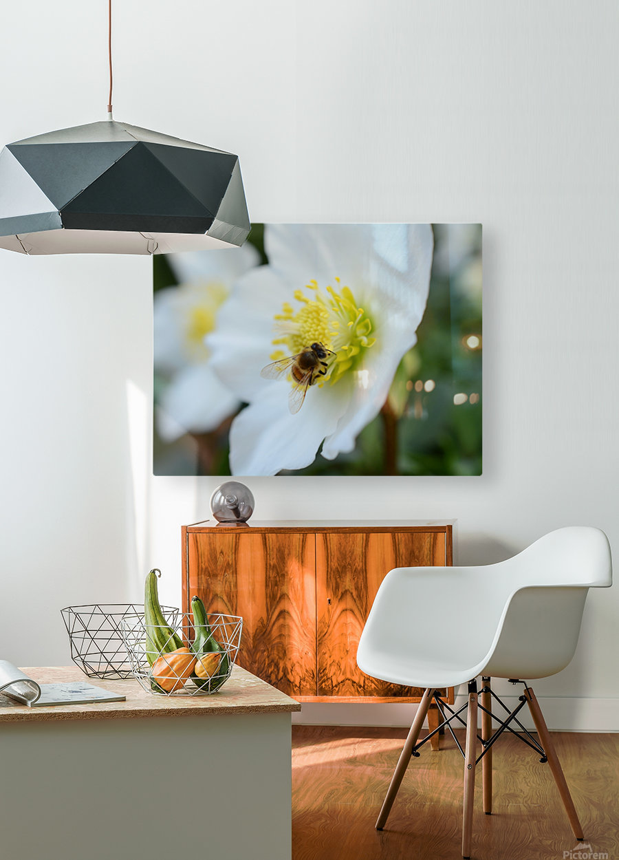 Bee On White Flower Photograph  HD Metal print with Floating Frame on Back