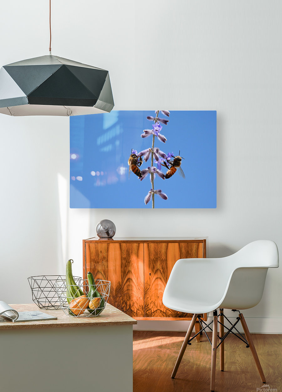 Two Bees On Vine Photograph  HD Metal print with Floating Frame on Back